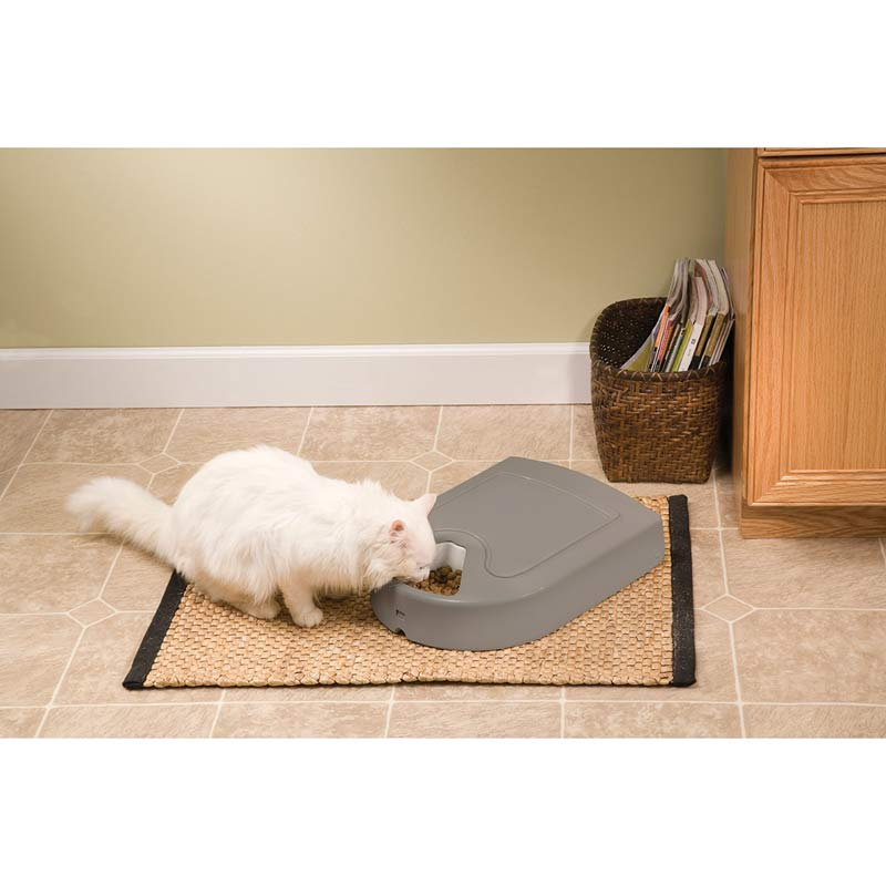 Cute White Cat using Eatwell 5 Meal Pet Feeder to Eat