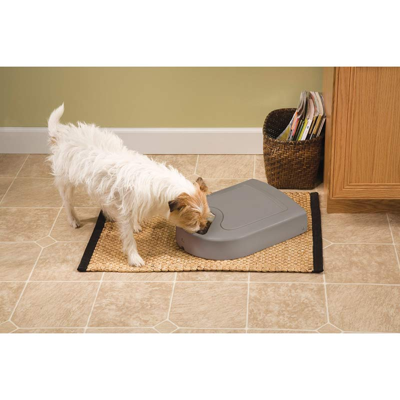 Small Dog Eating out of Eatwell 5 Meal Pet Feeder