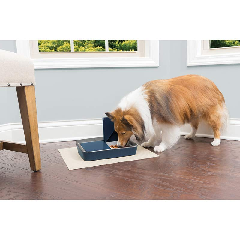 Sheltie Dog eating out of PetSafe Eatwell Digital Two Meal Feeder