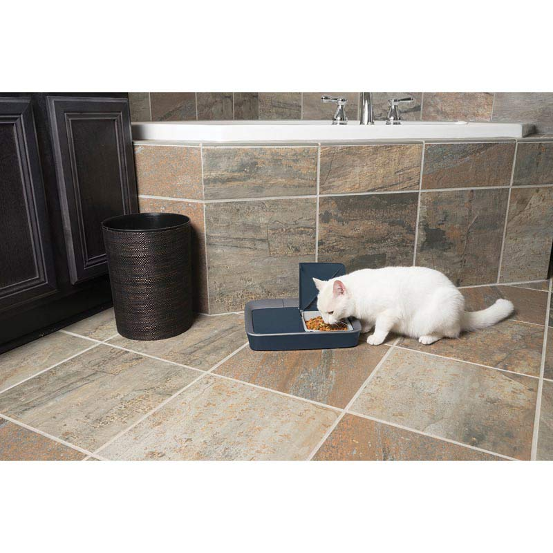 Kitty Cat eating out of PetSafe Eatwell Digital Two Meal Feeder