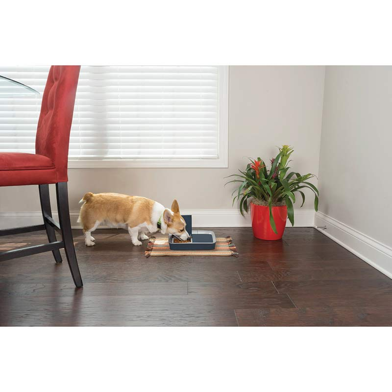 Adorable Corgy eating out of PetSafe Eatwell Digital Two Meal Feeder