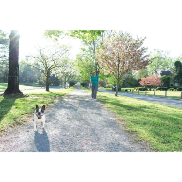 Dog free walking without a leash because of PetSafe 300 Yard Lite Remote Trainer