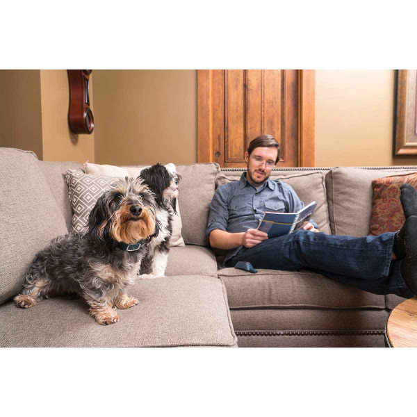 Man sitting on couch with two dogs, one dog wearing PetSafe 300 Yard Lite Remote Trainer
