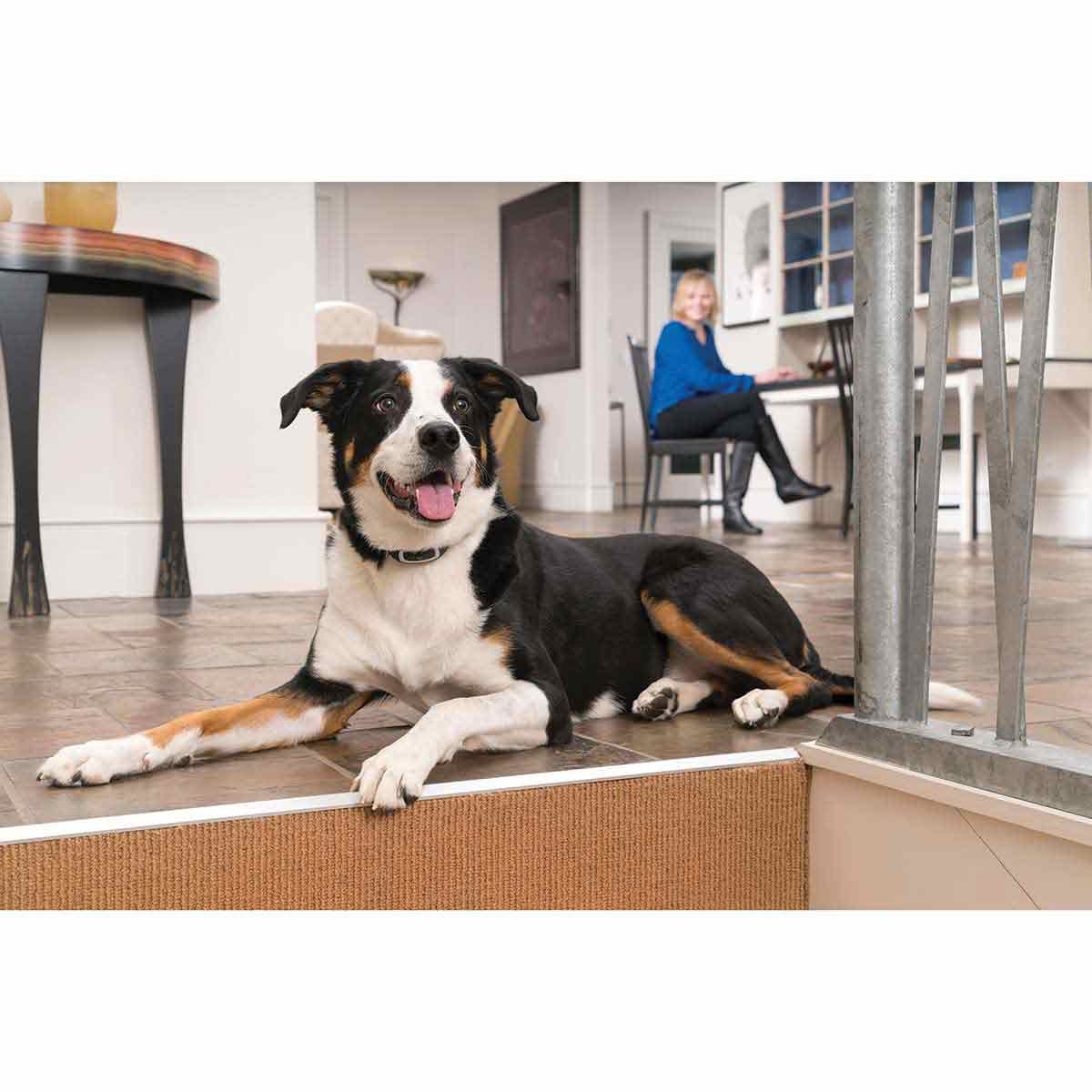Dog wearing PetSafe Yard Remote Trainer 300 Yard