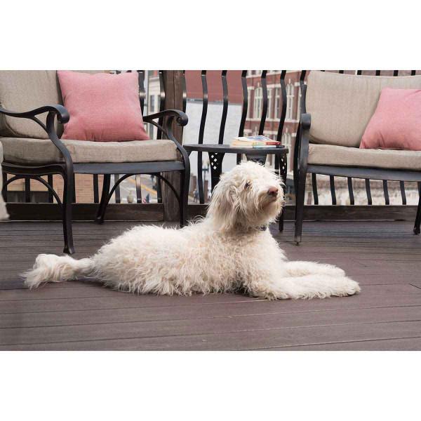 Shaggy dog wearing PetSafe Lite Rechargeable Bark Collar