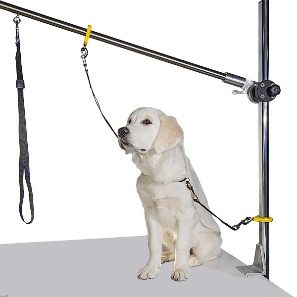 Dog showcasing the Resco Grooming Post System