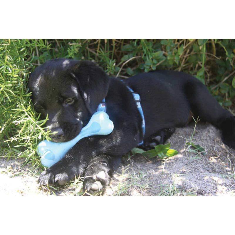 Black Puppy Dog Playing with Small 4 inch ROGZ Da Bone Dog Chew Toy