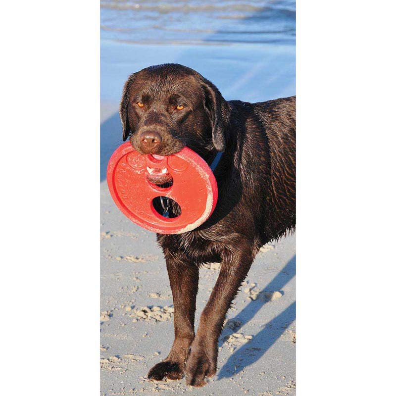 Adult dog playing with Red ROGZ Flying Object Disc