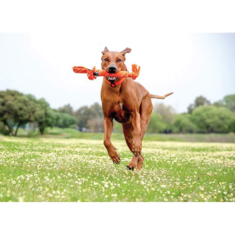 Dog running with ROGZ Scrubz Medium Fetch Toy