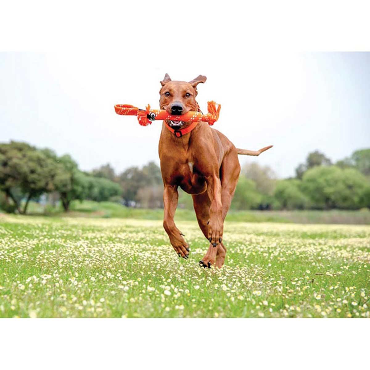 Dog running with ROGZ Scrubz Large Dog Toy