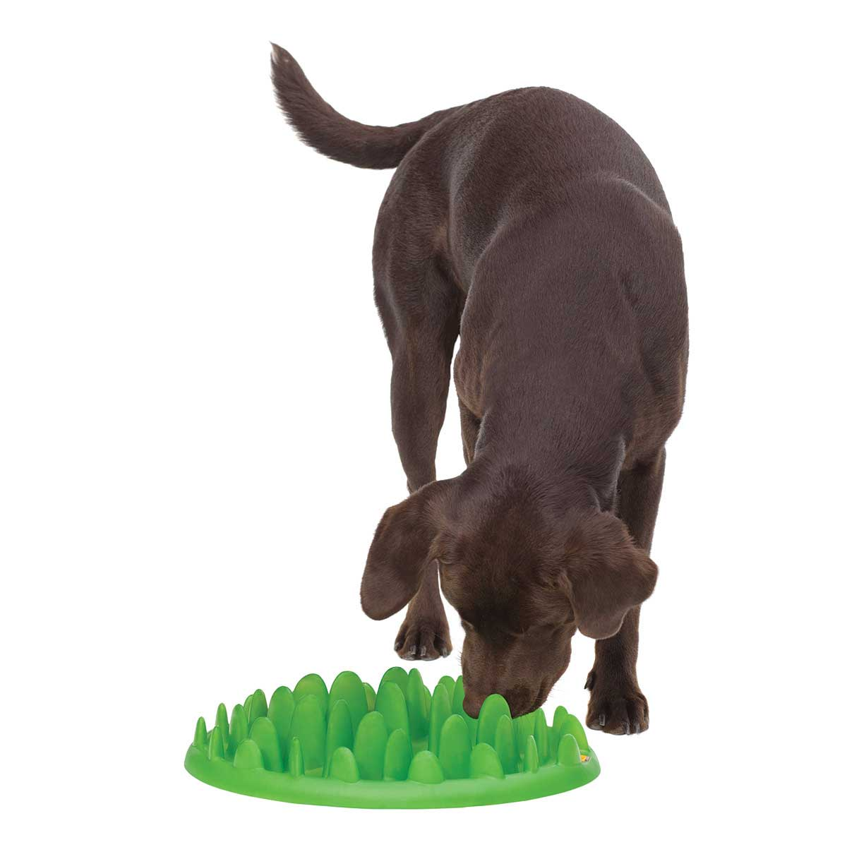 Doggy eating out of Green Interactive Feeder