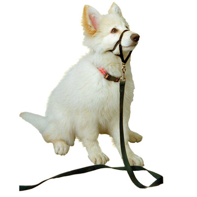 Halti Training Collar For Small Dogs Sheltie, Westie, Whippet