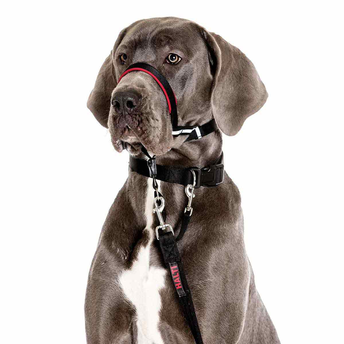 Halti Optifit Large Head Collar for Dogs