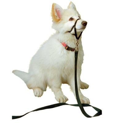 Black Halti Training Collar for Dogs - For Boxer, Chow, Shepherd