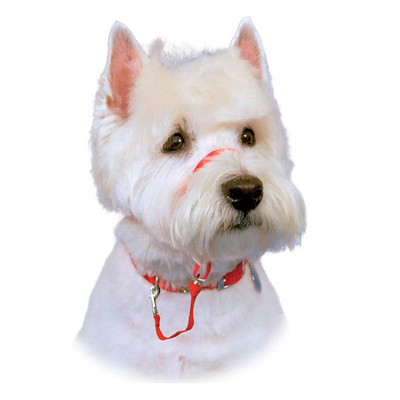 Red Halti Training Collar For Boxer, Chow, Shepherd Dogs
