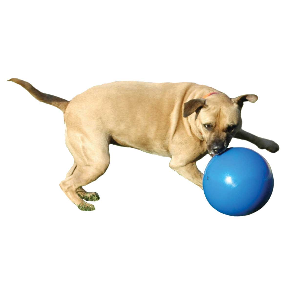 Boomer Ball for Large Macho Dogs Medium 6 inch