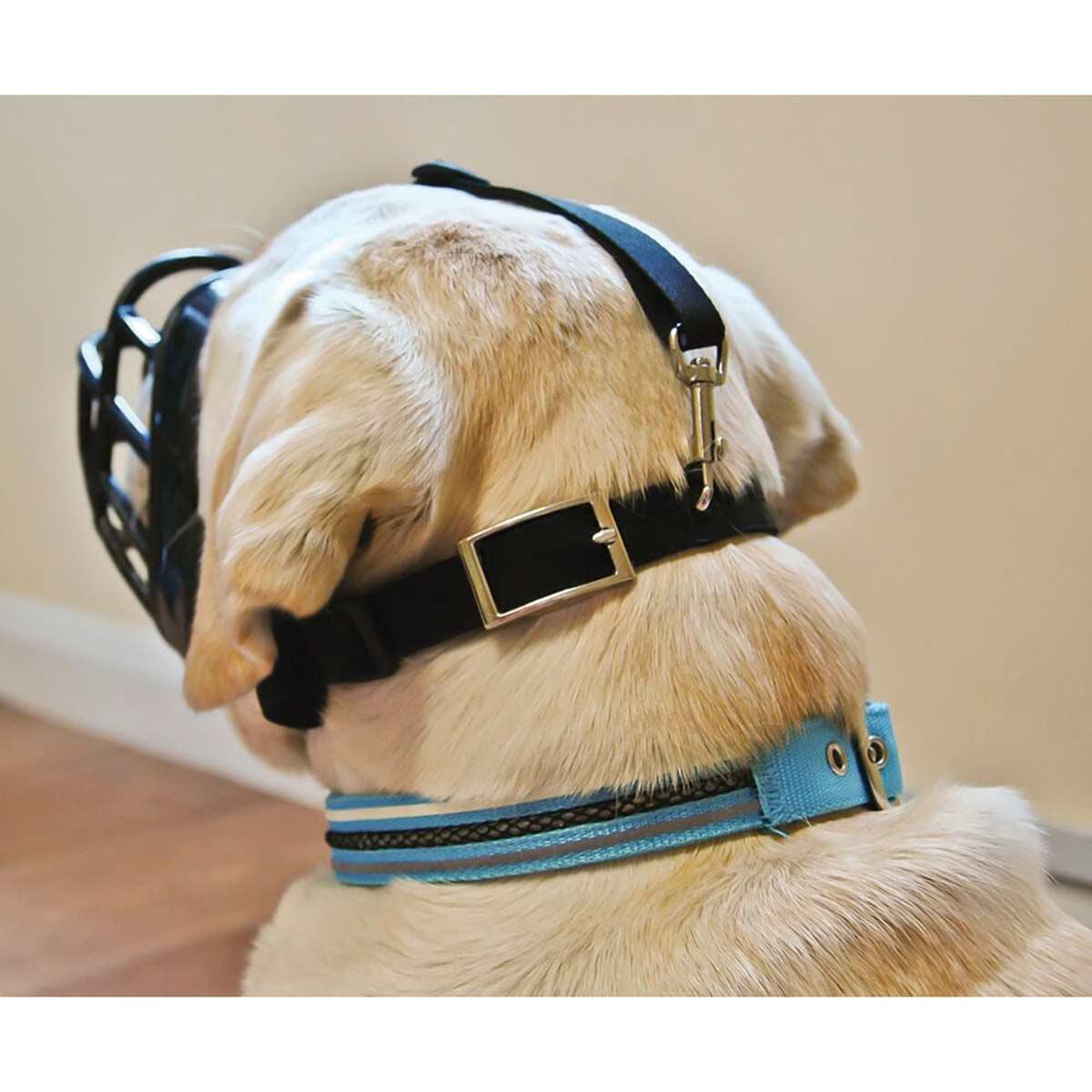 Back of Baskerville Ultra Muzzle Size 1 Border Terrier