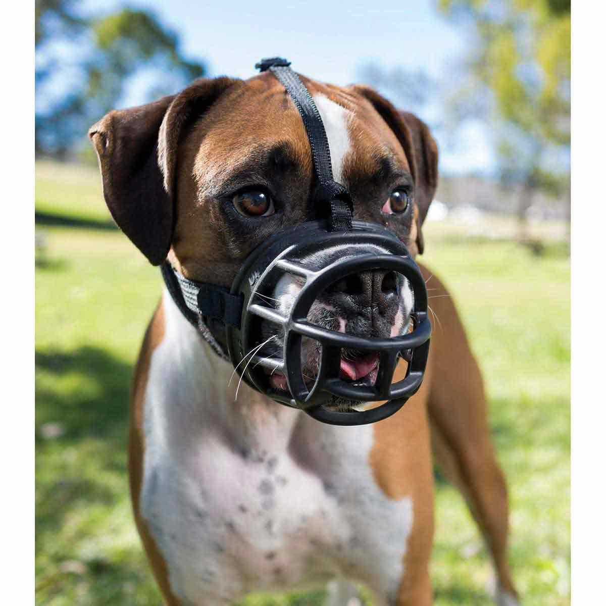 Dog Wearing Baskerville Ultra Muzzle Size 4 Springer